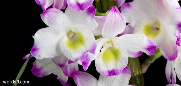 بالصور كلمات عن الورد , كلمات عن الورود رائعه 5456 2