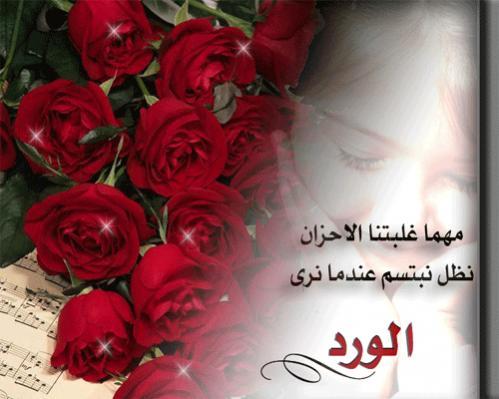 بالصور كلمات عن الورد , كلمات عن الورود رائعه 5456 3