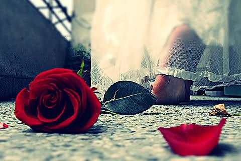 بالصور خلفيات رومنسيه , خلفيات رومنسيه جميلة 5478 2