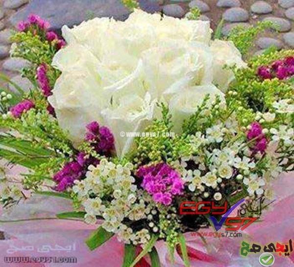 بالصور صور ورد صور ورد , اجمل الصور عن الورد 5480 3