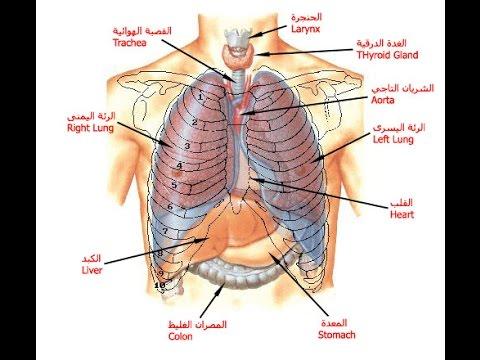 بالصور صور جسم الانسان , صور لجسم الانسان 5493 1