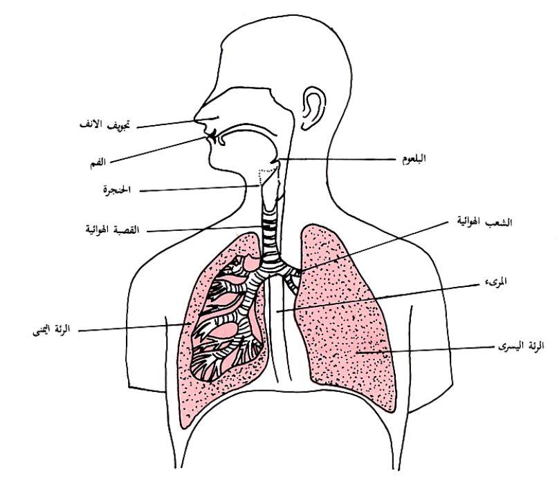 بالصور صور جسم الانسان , صور لجسم الانسان 5493 2