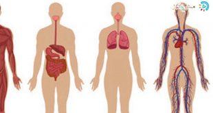 صور صور جسم الانسان , صور لجسم الانسان