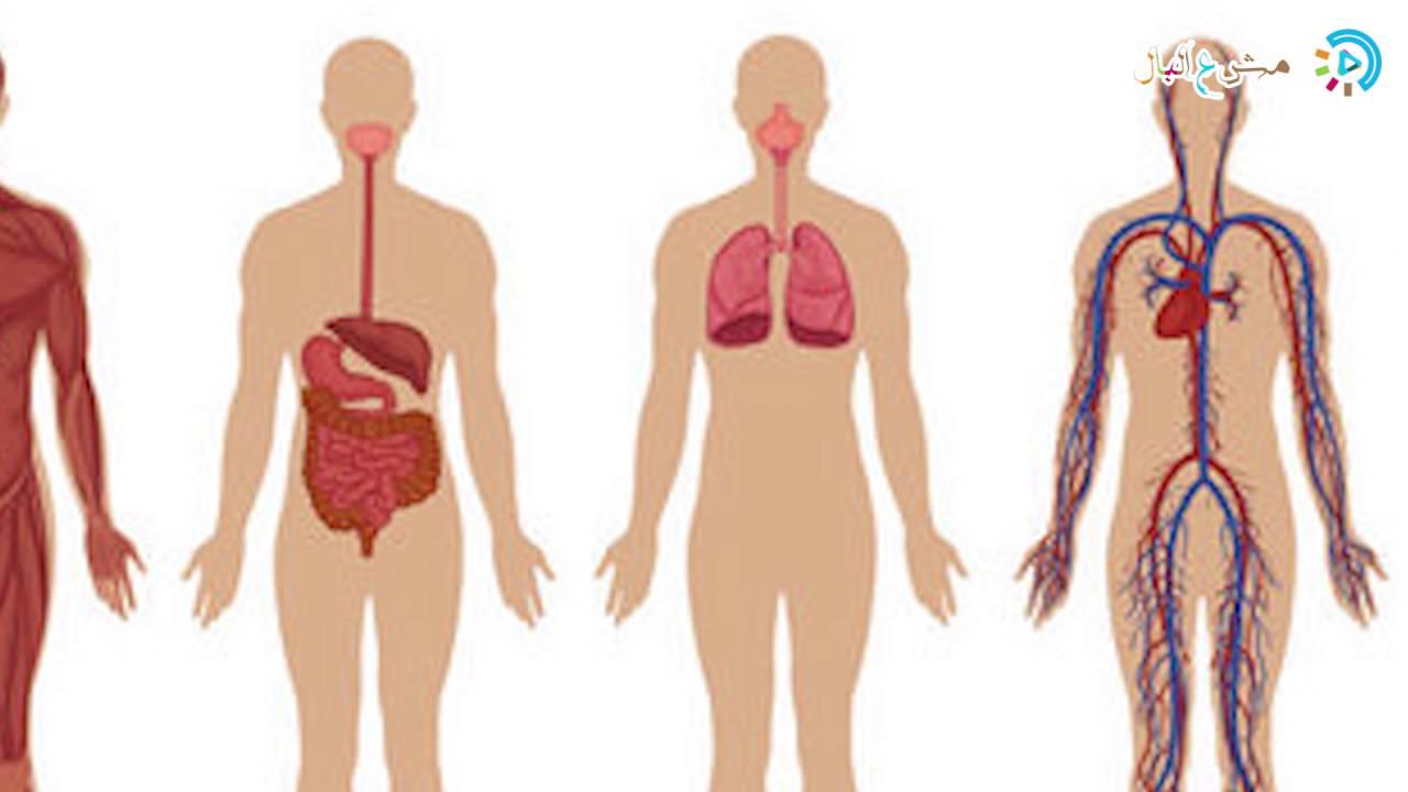 بالصور صور جسم الانسان , صور لجسم الانسان 5493