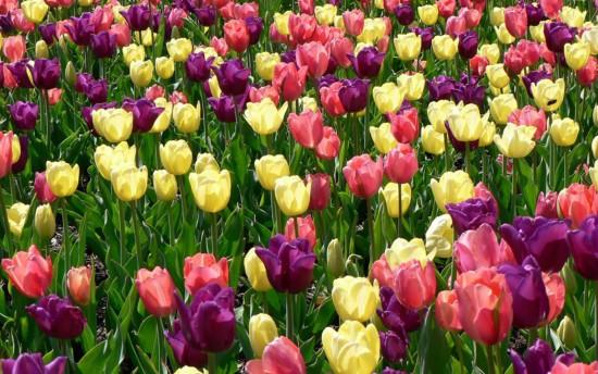 بالصور صور ازهار , صور الازهار الجميله 5495 2
