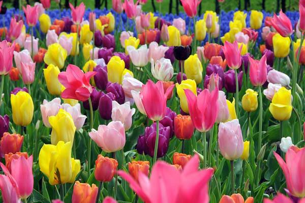 بالصور صور ازهار , صور الازهار الجميله 5495 3