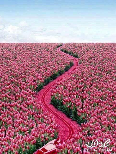 بالصور صور ازهار , صور الازهار الجميله 5495 4