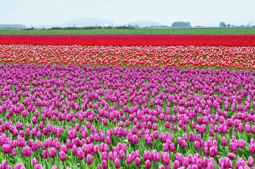 بالصور صور ازهار , صور الازهار الجميله 5495 5