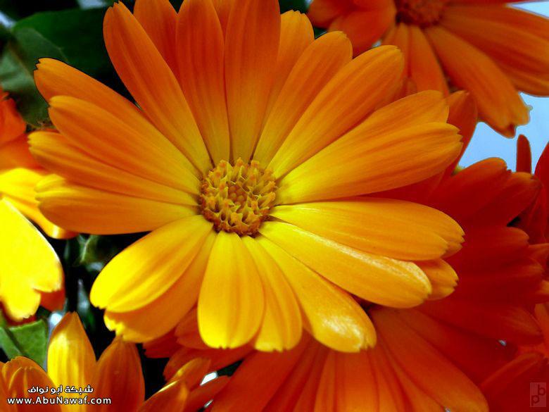 بالصور صور ازهار , صور الازهار الجميله 5495 6