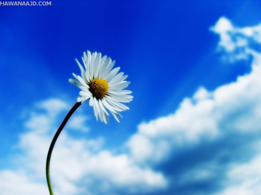 بالصور صور ازهار , صور الازهار الجميله 5495 7
