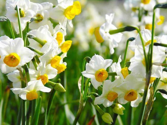 بالصور صور ازهار , صور الازهار الجميله 5495 8