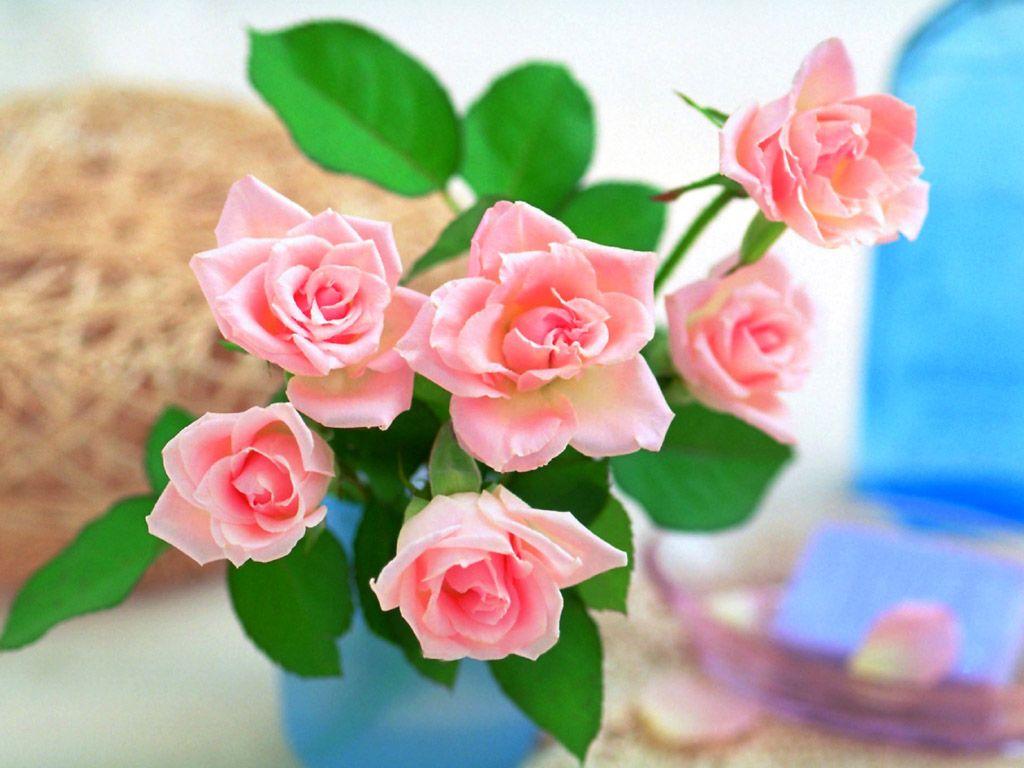 صور صور ازهار , صور الازهار الجميله