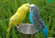 صور صور عصافير , صور عصافير جميله