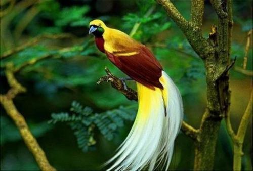 بالصور صور عصافير , صور عصافير جميله 5532 1