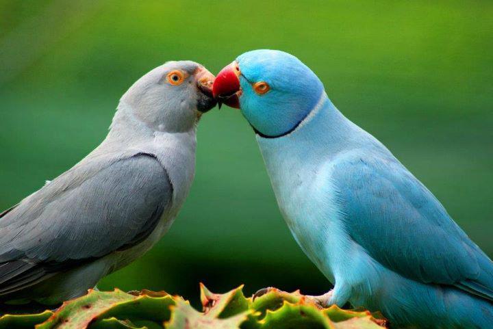 بالصور صور عصافير , صور عصافير جميله 5532 2