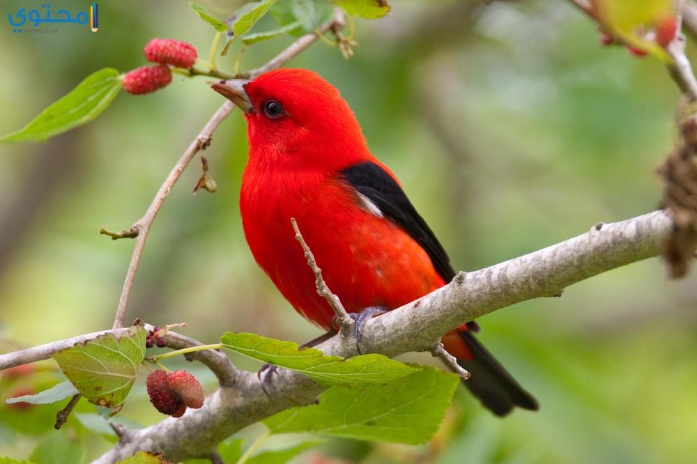 بالصور صور عصافير , صور عصافير جميله 5532 3