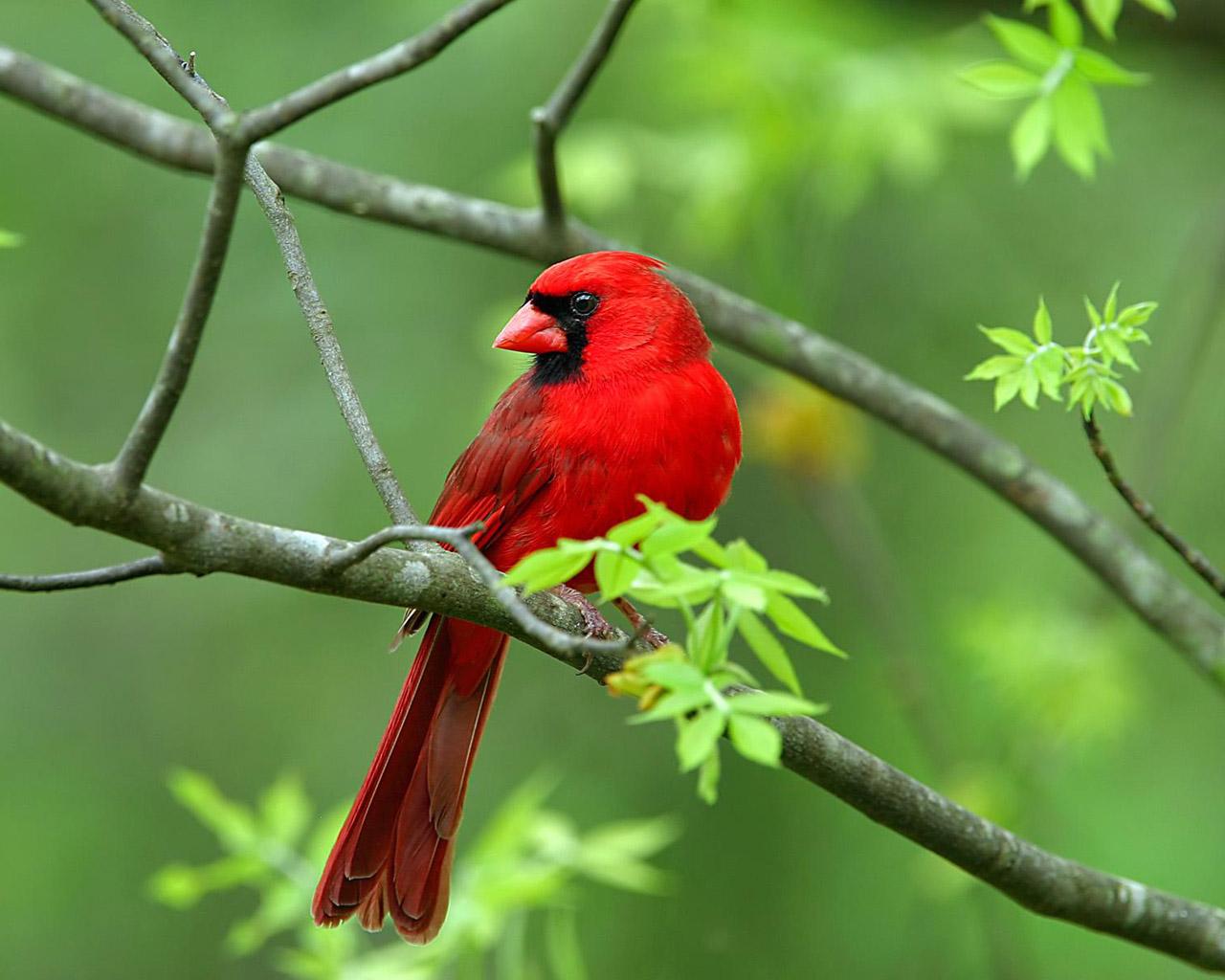 بالصور صور عصافير , صور عصافير جميله 5532 4