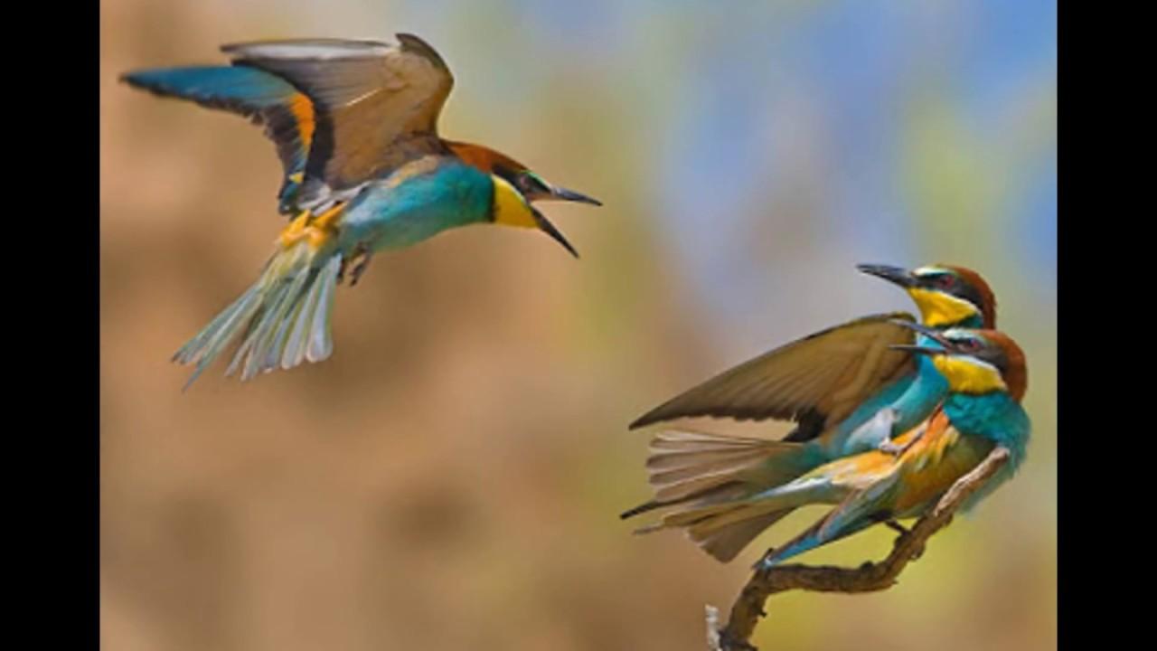 بالصور صور عصافير , صور عصافير جميله 5532 5