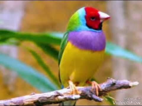 بالصور صور عصافير , صور عصافير جميله 5532 6