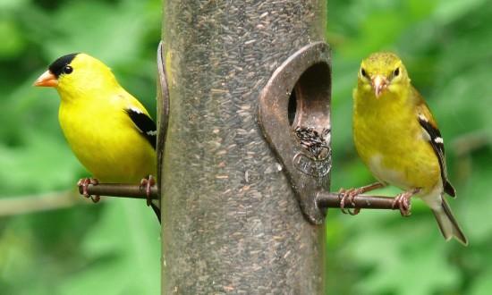 بالصور صور عصافير , صور عصافير جميله 5532