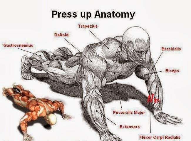 بالصور تمرين العضلات , ماهى التمارين الخاصه بالعضلات 5625