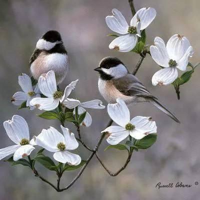 بالصور صور ورد الياسمين , صور جميلة لورد والياسمين 5636 8