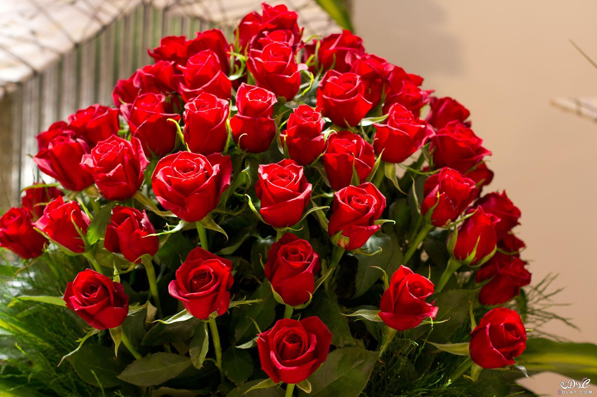 بالصور صور اجمل الورود , صور ائعة لاجمل الورود 5680 1