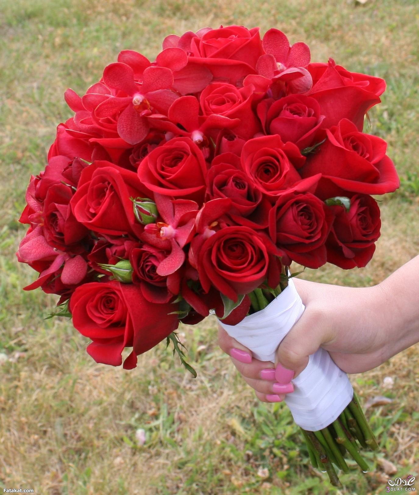 بالصور صور اجمل الورود , صور ائعة لاجمل الورود 5680 3