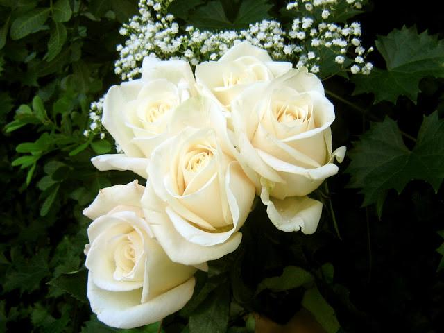 بالصور صور اجمل الورود , صور ائعة لاجمل الورود 5680 4