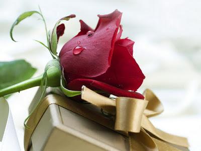 بالصور صور اجمل الورود , صور ائعة لاجمل الورود 5680 8