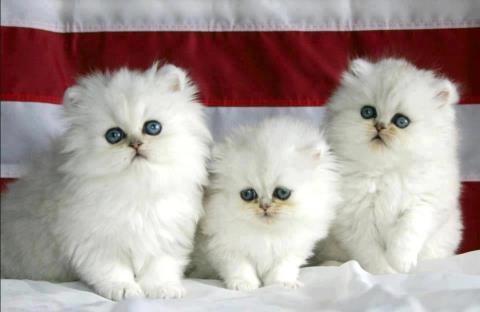 صور اجمل صور قطط , صور اجمل قطط جميلة