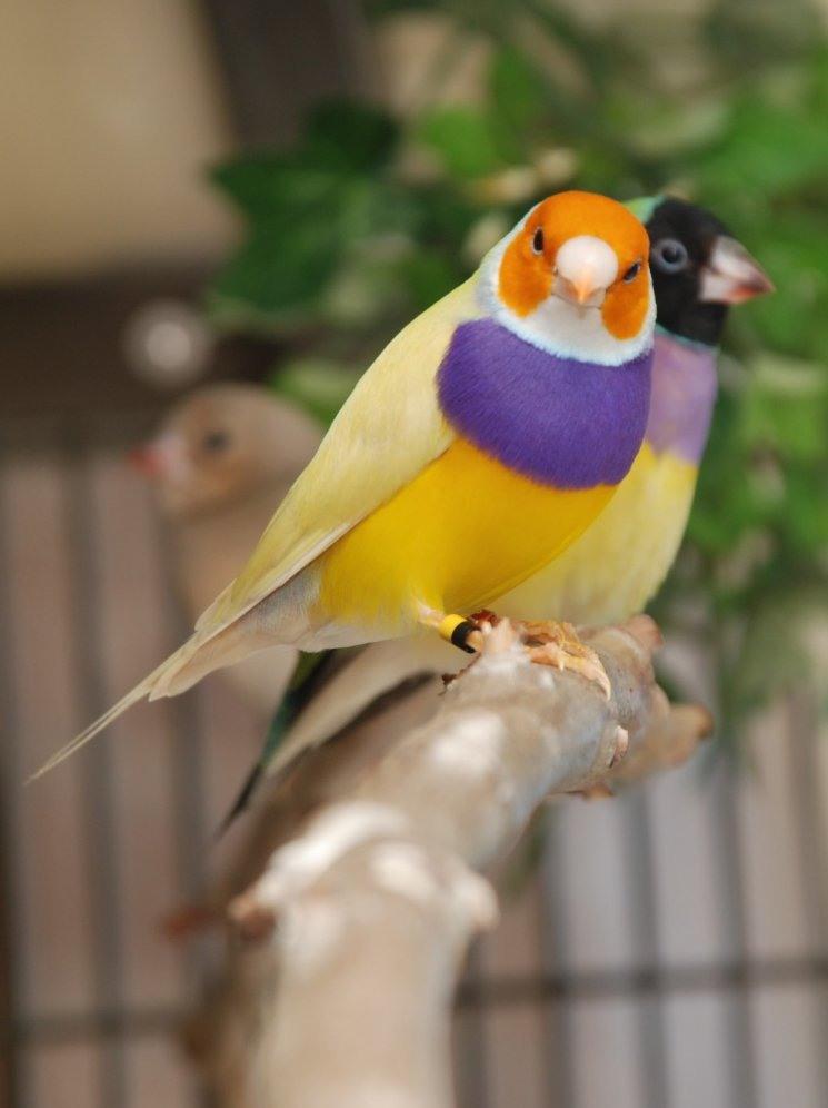 بالصور صور بلابل , صور بلابل والعصافير جميلة 5790 4