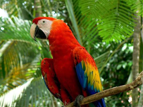 بالصور صور بلابل , صور بلابل والعصافير جميلة 5790 6