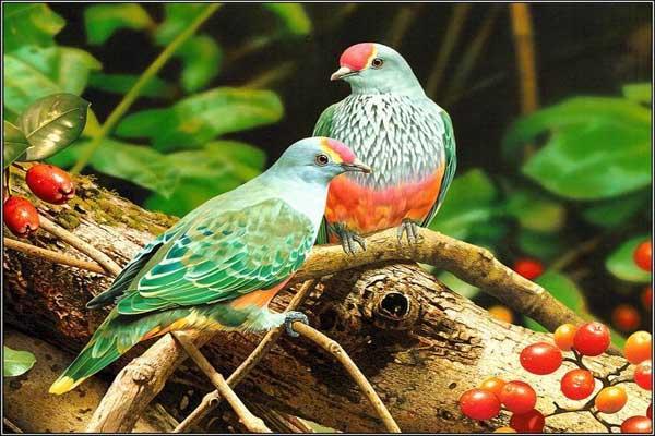 بالصور صور بلابل , صور بلابل والعصافير جميلة 5790 7