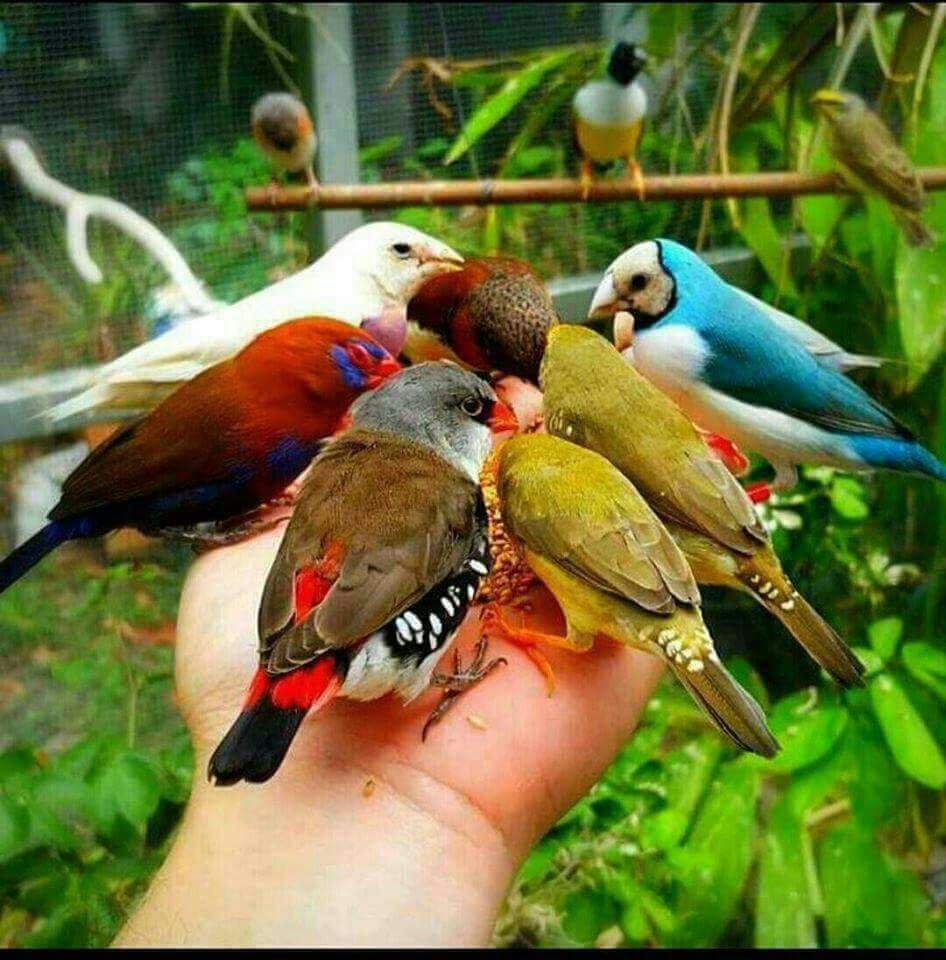 بالصور صور بلابل , صور بلابل والعصافير جميلة 5790 8