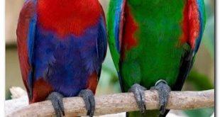 صورة صور بلابل , صور بلابل والعصافير جميلة