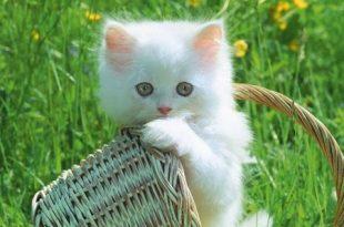 صور خلفيات قطط , اجمل الخلفيات لقطط جميله جدا