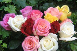 صور زهور جميلة , صور زهور جميلة جدا
