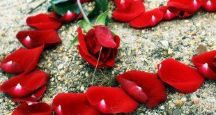 صور صور حب جميله , اجمل صورة رومانسية