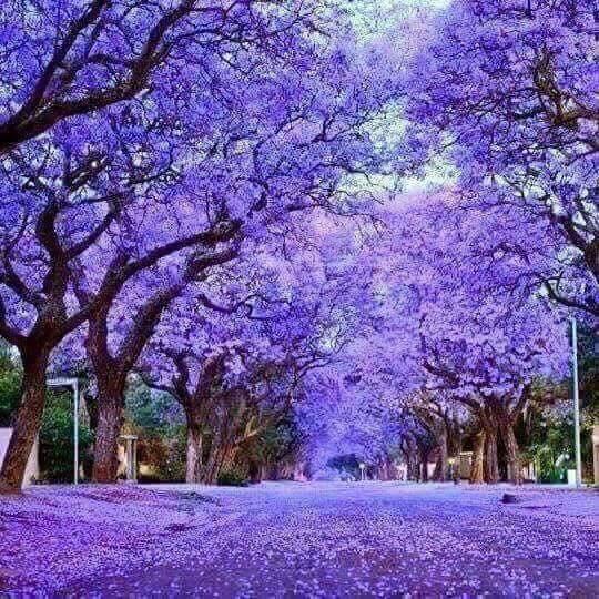 صور صور مناظر طبعيه , مناظر طبيعية جميلة