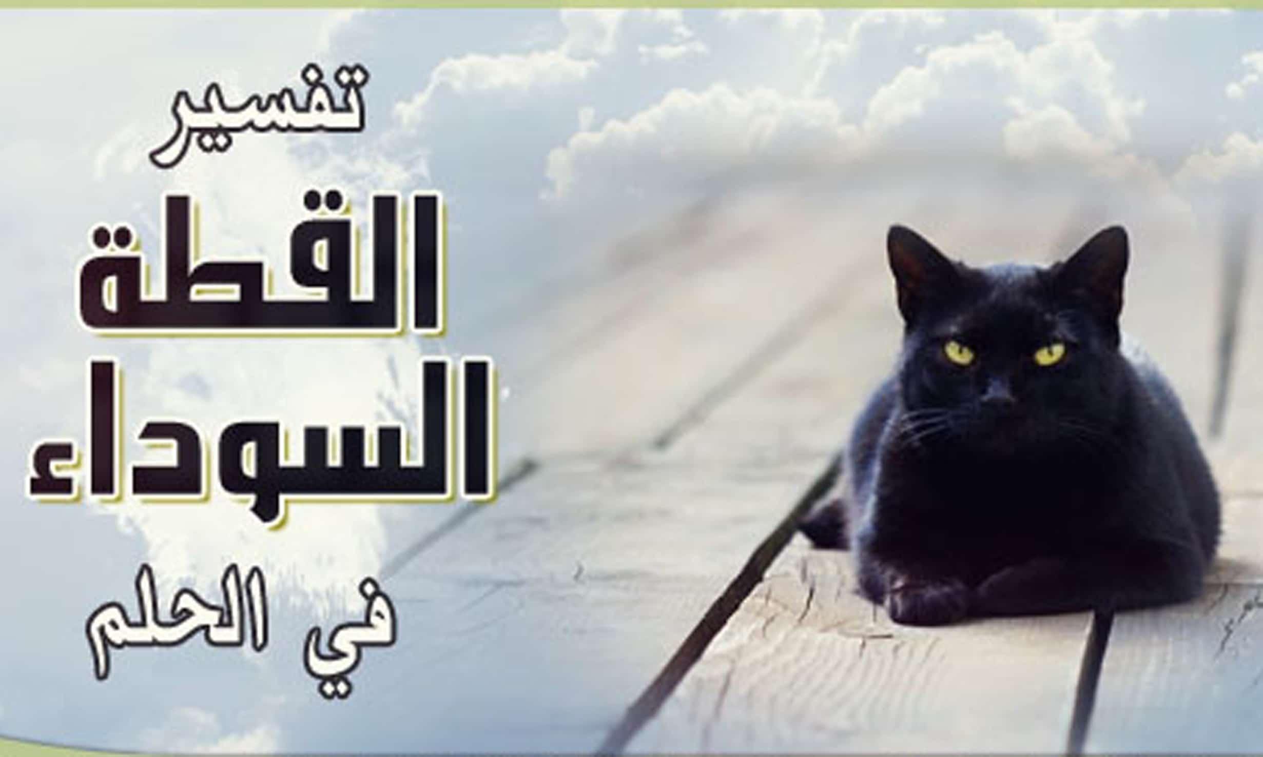 صور رؤية القطط بالمنام , رايت قطة فى المنام