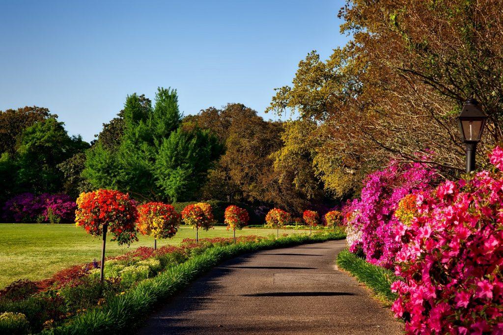 صور اروع الصور للطبيعة , خلفيات من مناظر زهور و حدائق جميلة جدا