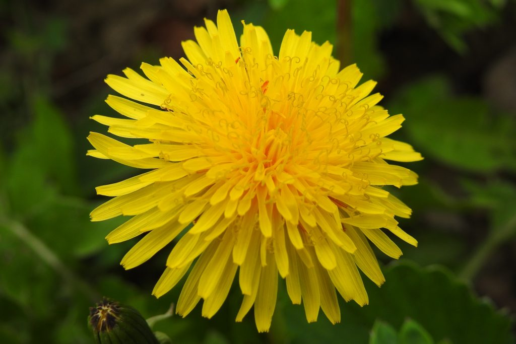 صور صور خلفيات جميله , خلفيه زهور رائعة للكمبيوتر