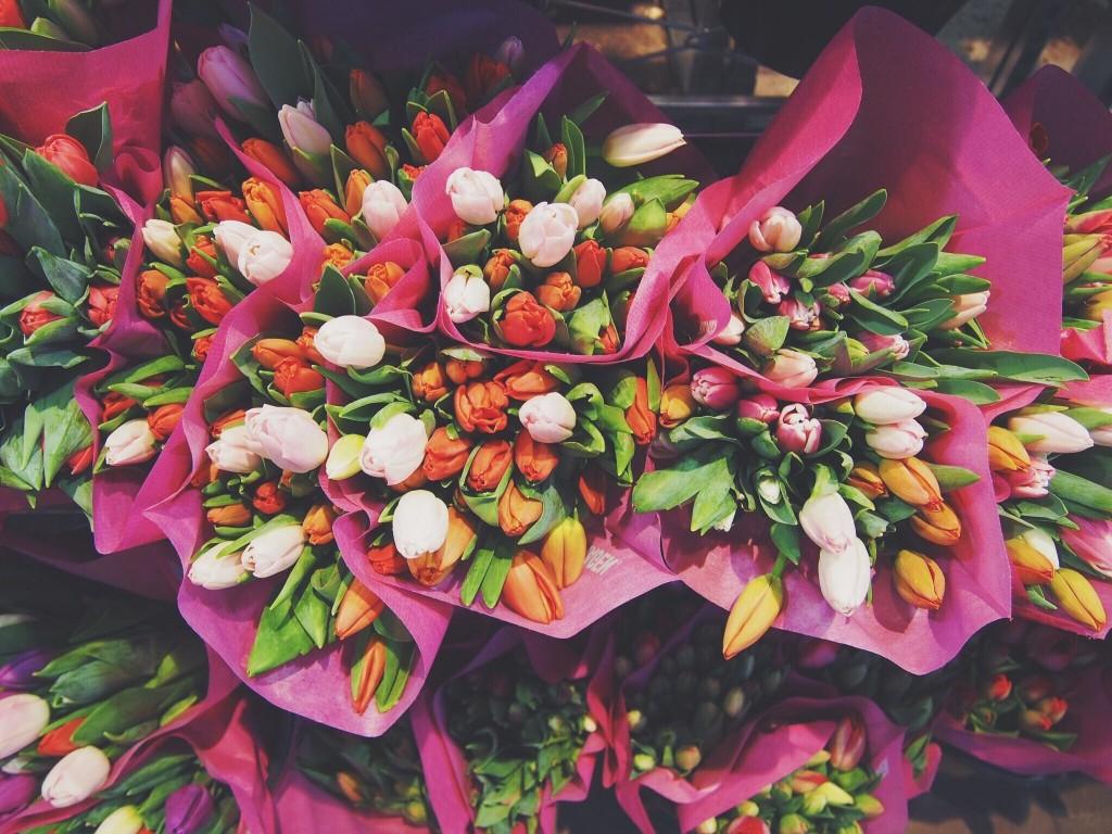 صور اجمل صور الورد , جمال الطبيعة الساحرة في صور الورود