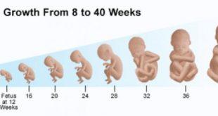 صور مراحل تكوين الجنين بالصور من اول يوم , صور مراحل تكوين الجنين