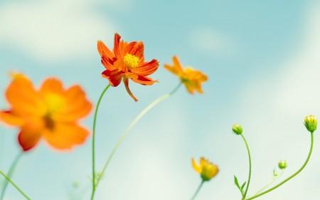 صور خلفيات زهور , اجمل الخلفيات زهور روعة