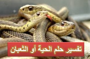 صور تفسير حلم الثعابين في البيت , حلم التعابين في البيت شر ام خير