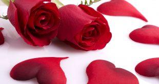 صور صور اجمل ورد , الورد رمز الحب