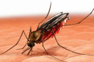 صورة مرض الملاريا , الامراض و اعراضها و الوقايه منها