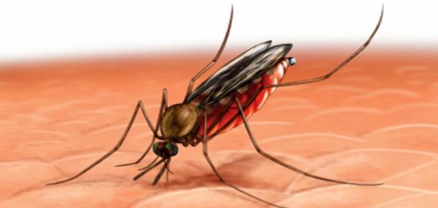 صور مرض الملاريا , الامراض و اعراضها و الوقايه منها
